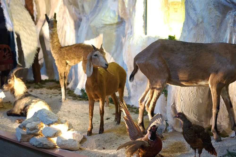 Sint Jan Kerststal 01 - Den Bosch Tips