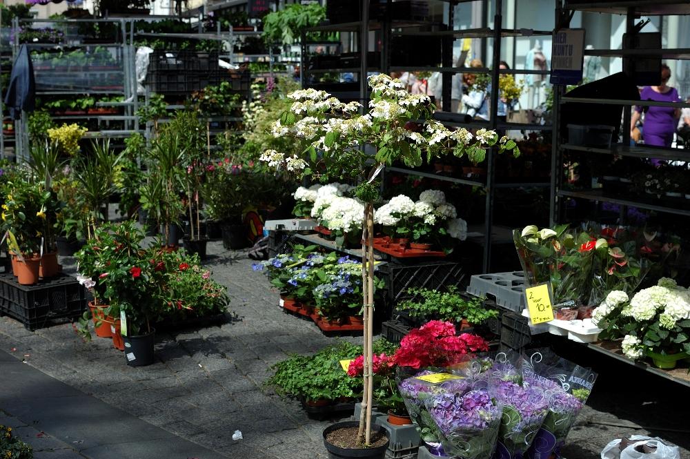 Geraniummarkt 09a - Den Bosch Tips