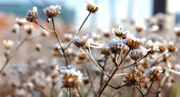 Winter in Den Bosch (fotoserie)