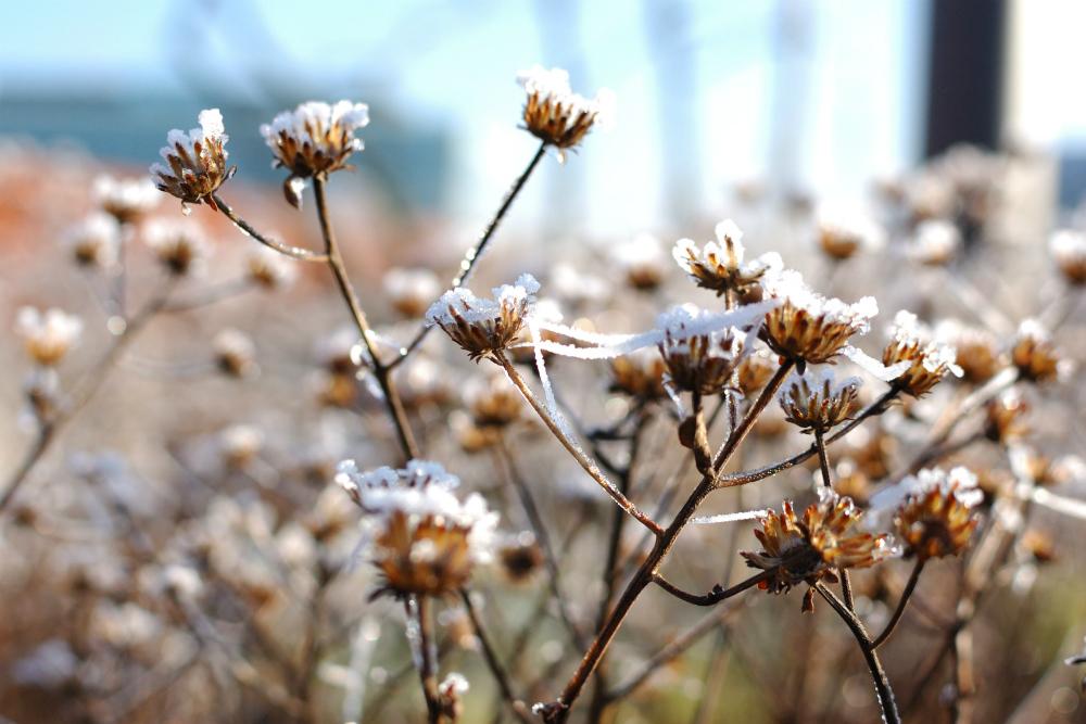 winter-10-s-den-bosch-tips