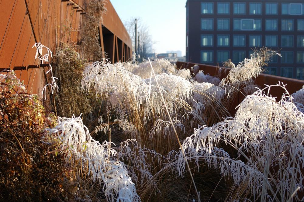 winter-13-s-den-bosch-tips