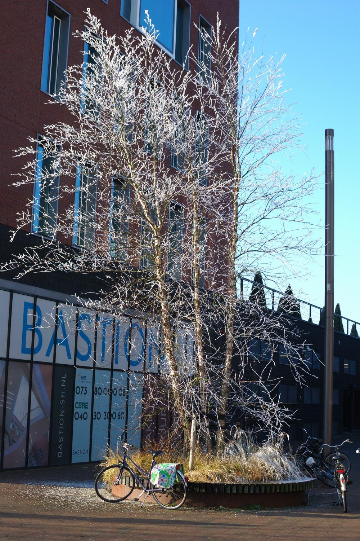 winter-17-s-den-bosch-tips
