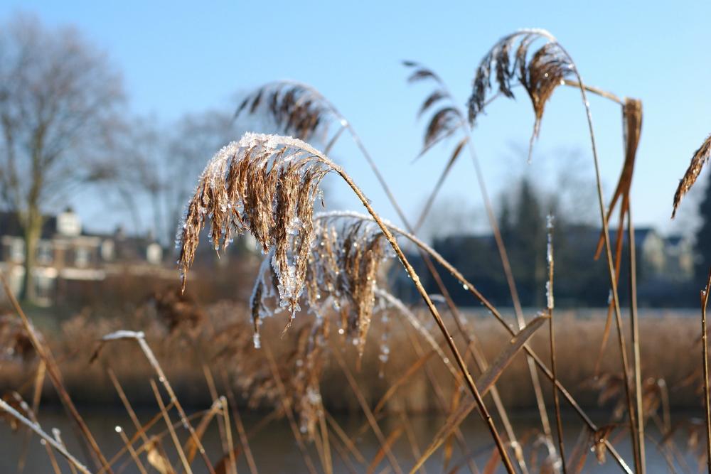 winter-54-s-den-bosch-tips